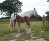 images/Gallery1/Mare.Foal.png