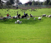 images/Gallery1/fieldhorseriding.png