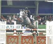 images/Gallery2/Grand.PrixShowMillstreet.Oct.2009.png